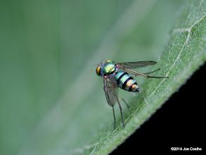 Photo: Bright fly