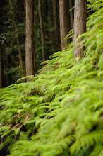 """Photo: This photo appeared in an article on my blog on Jul 13, 2013. この写真は7月13日ブログの記事に載りました。 """"Hiking From Kyoto's Kuuya-Taki Waterfall to the Tsukinowa-Dera Temple"""" http://regex.info/blog/2013-07-13/2284"""
