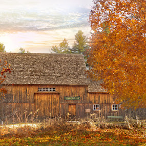 Fall in Sutton, MA by April Brown - Buildings & Architecture Other Exteriors ( orange, na, sutton, barn, foliage, fall, trees )