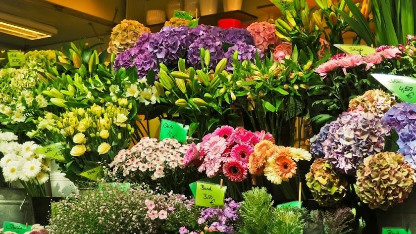 Fuerte aumento de las exportaciones de flores y plantas vivas