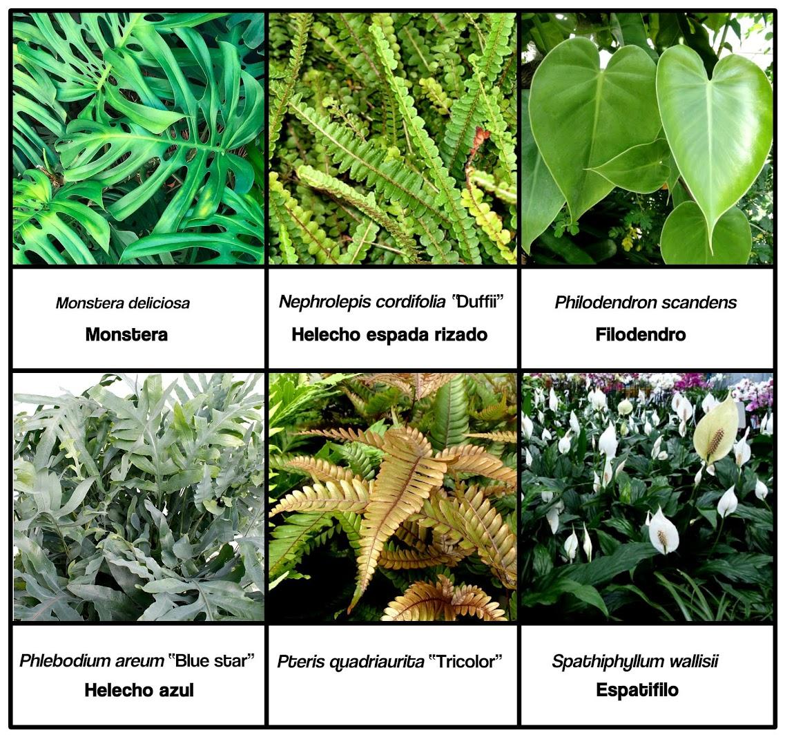 Plantas para jardines verticales de interior