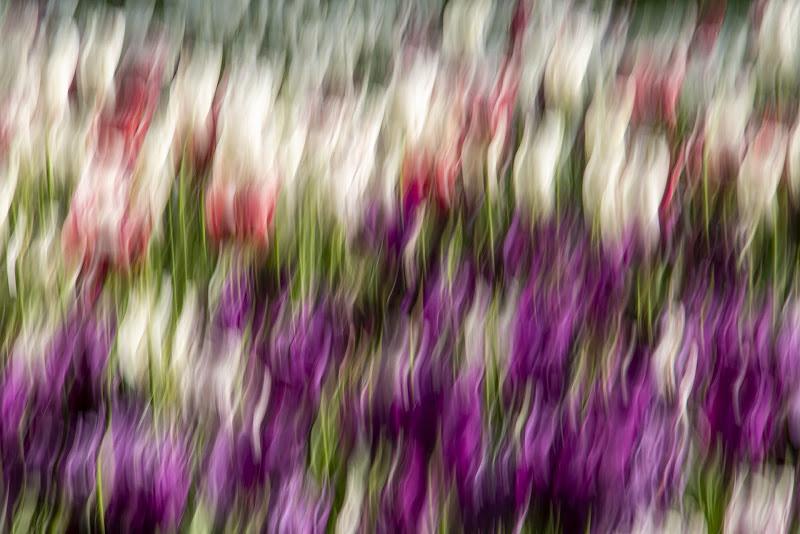 Fiamme di fiori di Maniman