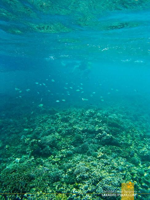 Boracay  Island Hopping Tour Snorkeling