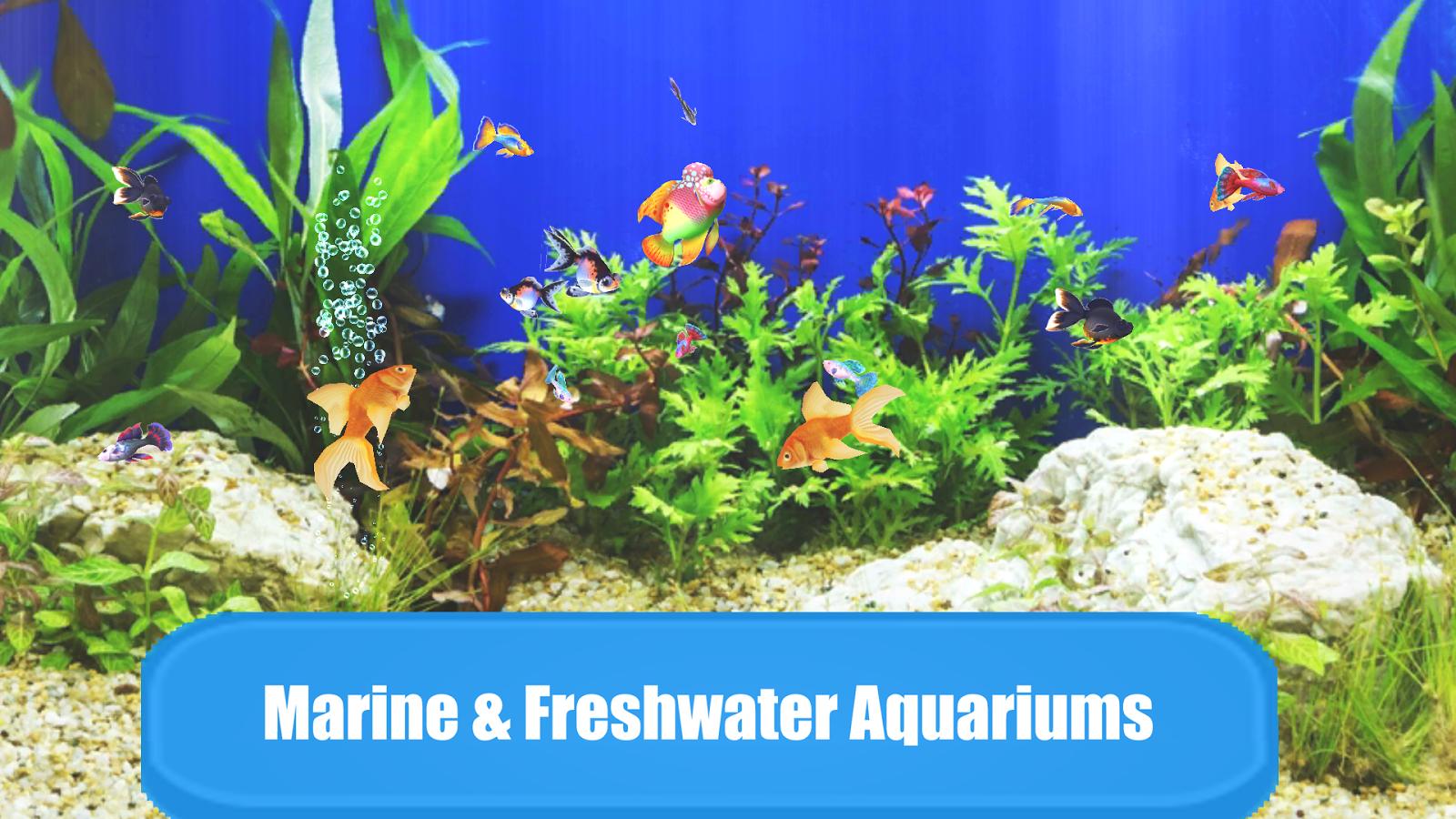 Freshwater aquarium fish compatibility chart - Aquarium Sim Screenshot