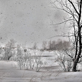 Silence of a Snow Storm by Kathy Woods Booth - Landscapes Weather ( snow, winter, snowing, quiet, serene )