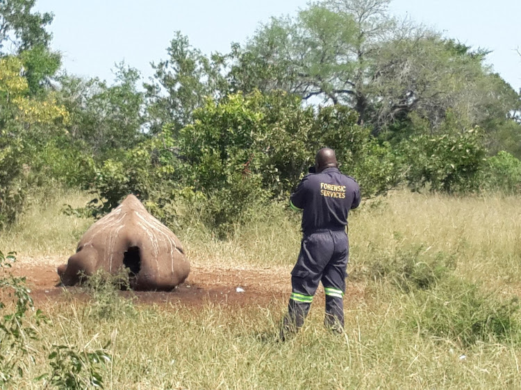File image: Forensic Services investigating a poached rhino.