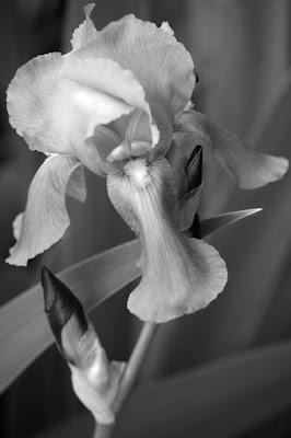 Fascino in bianco e nero di Leica