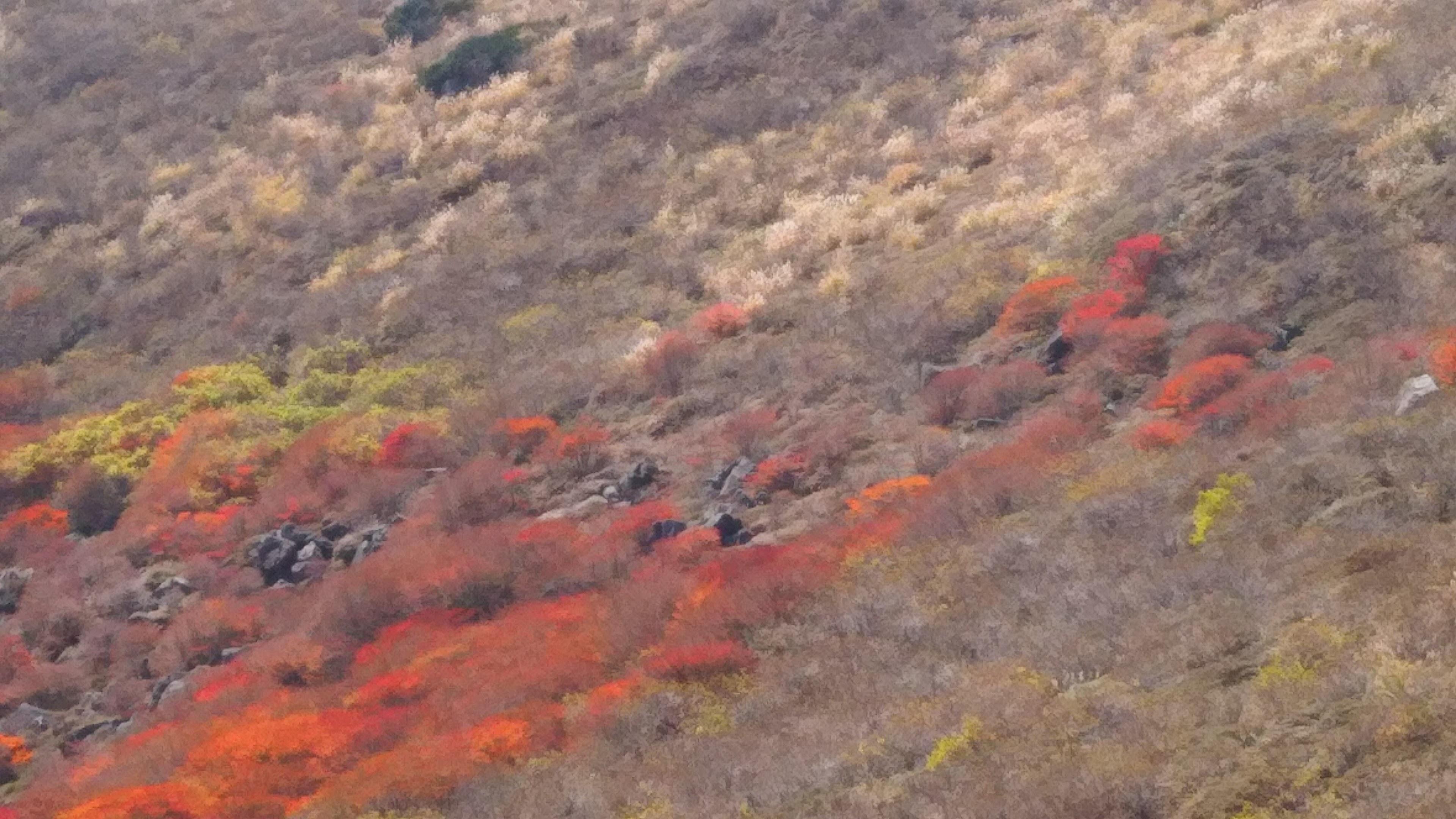 一枚の絵画_星生山南斜面の紅葉