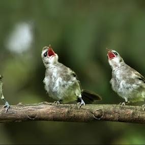 trio by Yan Abimanyu - Animals Birds