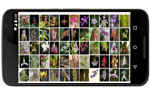 Orchids in the world - náhled