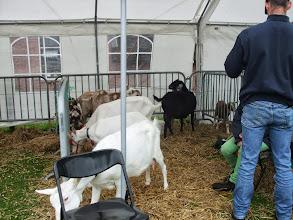 Photo: Inzending van kinderboerderij de Heuvel te Culemborg.