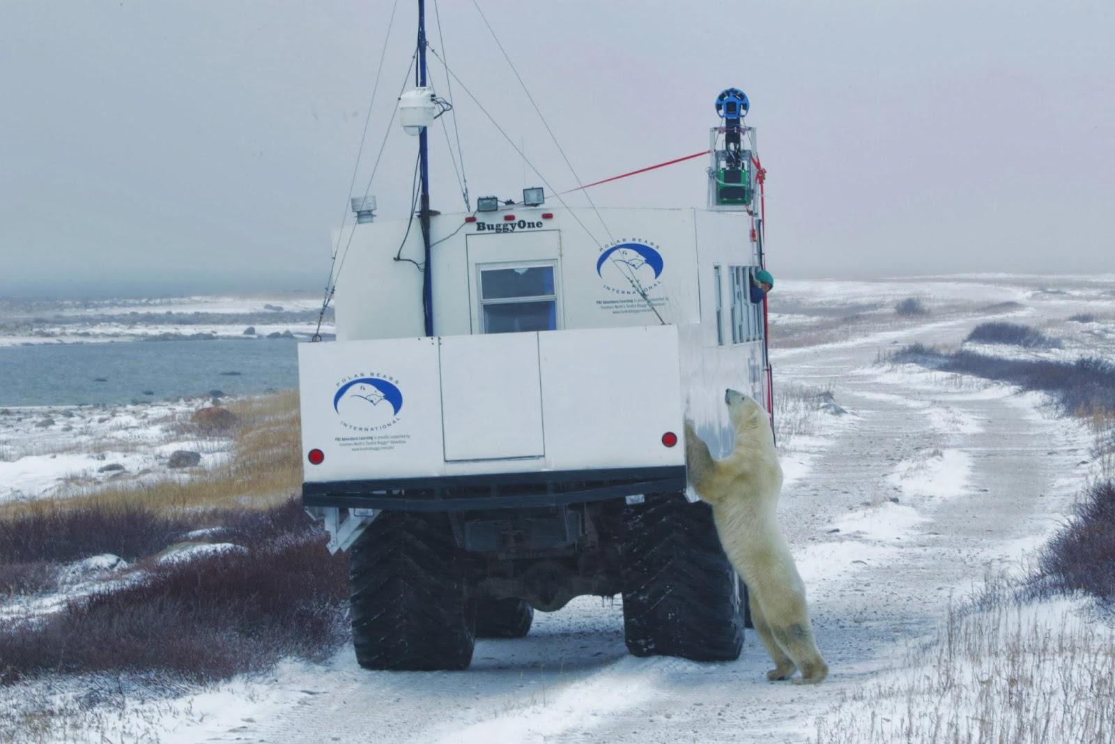Polar Bears 1.jpeg