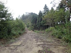 この先で林道が分岐