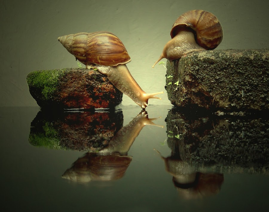 snails by Yudi Kusumo Mulyo - Animals Other