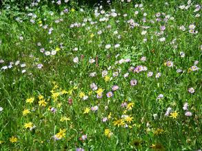 Photo: Wildflowers!