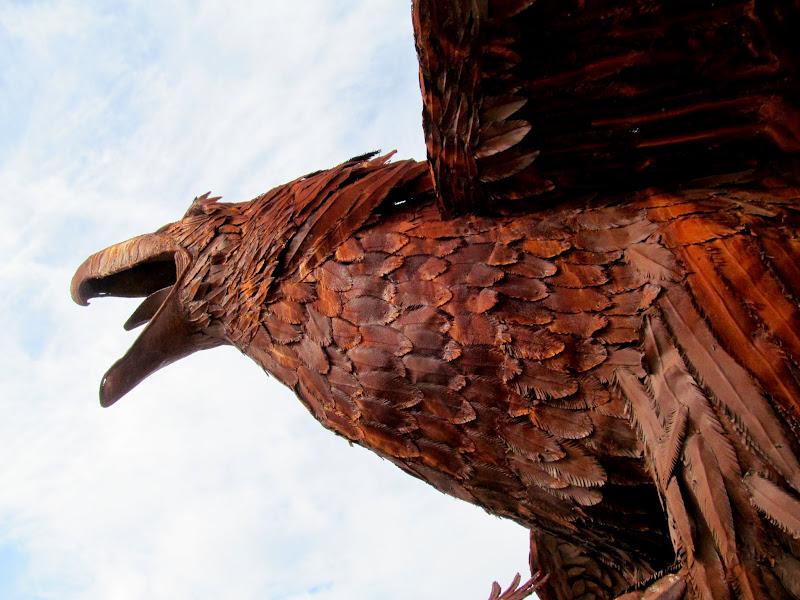 Photo: Eagle