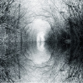 Nature's Tunnel by Ian Taylor - Black & White Landscapes ( water, fence, reflection, b&w, arch, bushes, flood, black & white, path, trees, mono, tunnel )