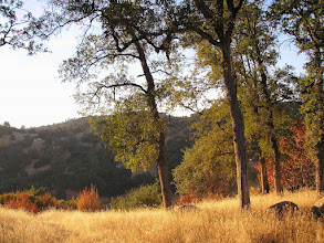 Photo: Yoga Farm, Grass Valley, CA - fall
