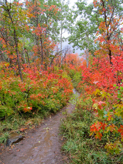 Fall colors on the trail