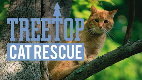 Treetop Cat Rescue thumbnail