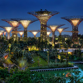 Gardens by the Bay Singapore by William Cho - City,  Street & Park  City Parks ( ©williamcho, supertrees, tourism attraction, blue hour, gardens by the bay, dragonfly bridge, supertree grove, singapore )