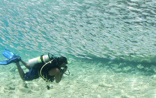 bonaire-wall-of-fish.jpg - A scuba diver comes across a wall of fish in Bonaire.