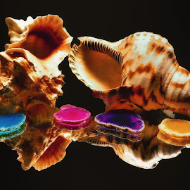 Classic Sea Shells and Cut Chineese Agate Stones by Dave Walters - Nature Up Close Other Natural Objects ( nature, sea shells, lumix fz2500, cut agate stones, colors )