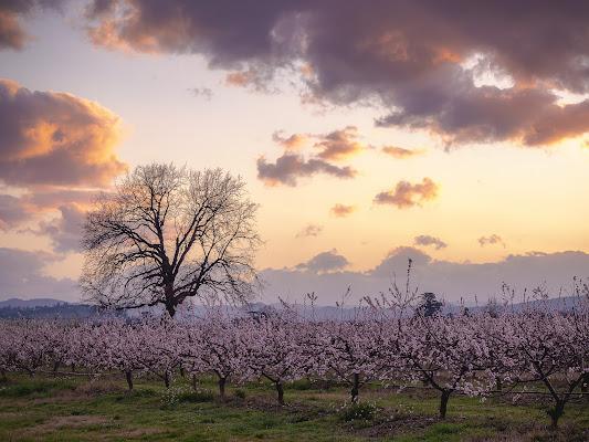 La fioritura di Marzo al tramonto di alagnol