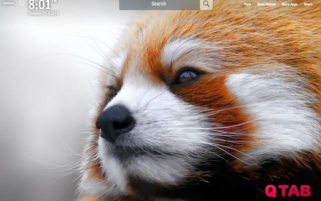 Red Panda New Tab Red Panda Wallpapers
