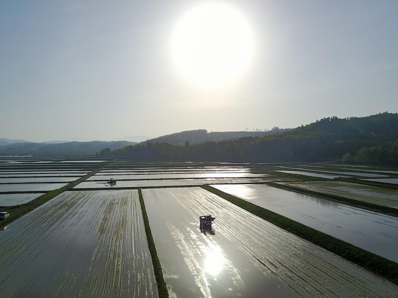 夕陽に染まる圃場
