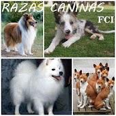 PERROS-RAZA free