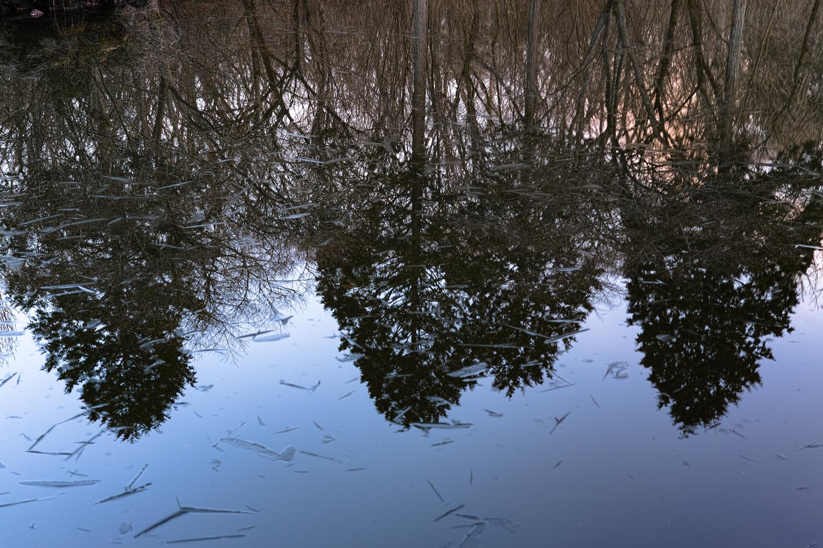 Photo: 「森が溶けていく」 / Melty morning forest.  木々が姿を現していく 冷たい空気に 光が届き 朝の森を呼び覚ます  SIGMA DP2 Merrill #SIGMA #DP2 #Merrill #Foveon  #landscapephotography ( http://takafumiooshio.com/archives/691 )