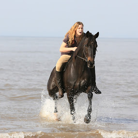 Fun on the Beach! by Dave Roberts - Animals Horses ( horse, sea,  )