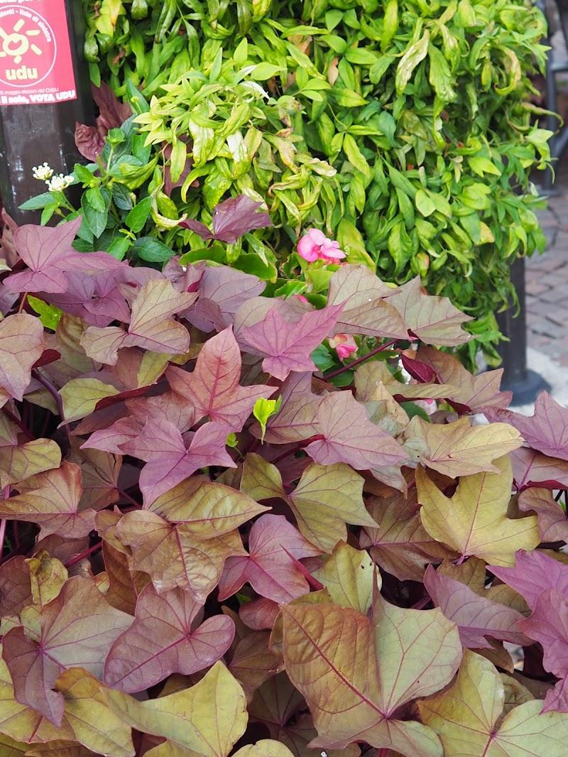 i colori dell' autunno_Trento di marco_de_giosa
