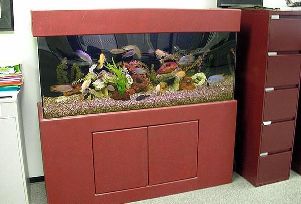 fish aquarium design ideas screenshot