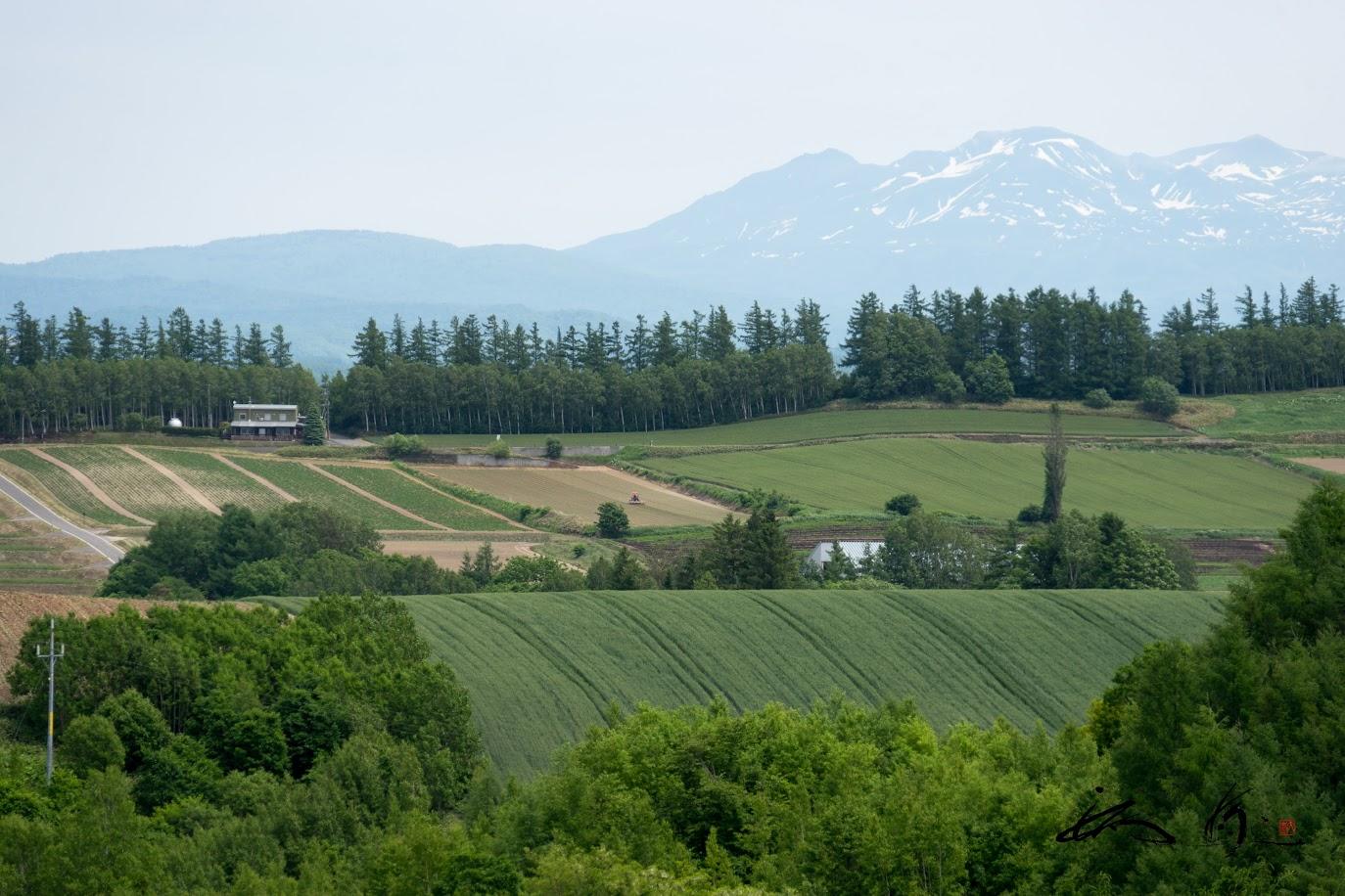 緑の丘陵風景