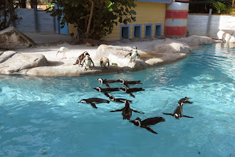 Photo: Penguins - how cute they are!