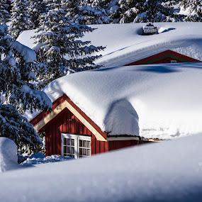Snowy Cottage by Morten Pettersen - Landscapes Travel ( cottage, snow, sjusjøen, norway )