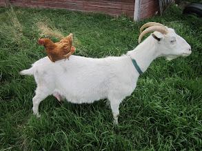 Photo: Cecilia and chicken