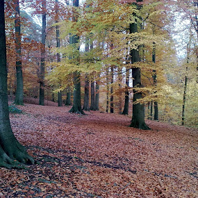 by Hilde Van Assche - Landscapes Forests (  )