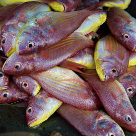 by Imran Mohammed - Animals Fish (  )