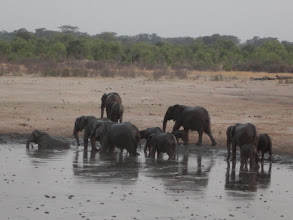 Photo: Elephants chillin' in the water