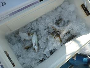 "Photo: 最後は""イノウエさん""。釣果その1 ・・・すでに氷で覆われてました。"