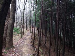 右下に小谷林道への道