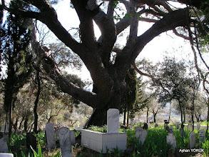 Photo: Gödence Köy Mezarlığı Kavakdere-Beyler-Gödence Arası EFES-MİMAS (İYON) YOLU 7. Etabı - 06.03.2016