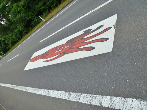 国道398号のタコ親子 写真3