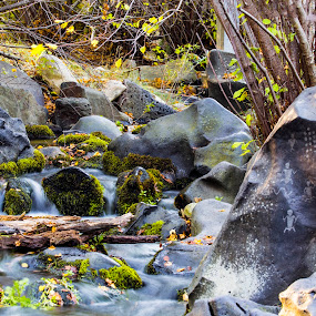 Stream at MK Nature Center by Rachaelle Larsen - Nature Up Close Water ( idaho, boise, glyphs, fall colors, moss, mk nature center )