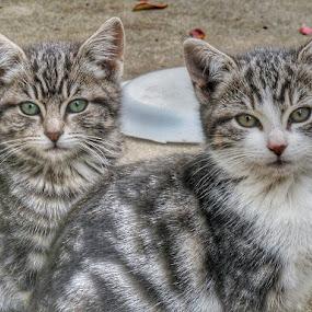 MY KITTIES  by Melanie Pond - Animals - Cats Kittens ( kitten, kittens, kitties, cute, kitty,  )