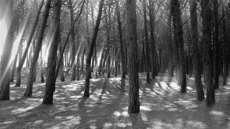 Magia nel bosco di pattylane