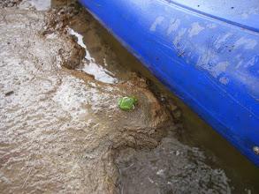 Photo: zielona żabka